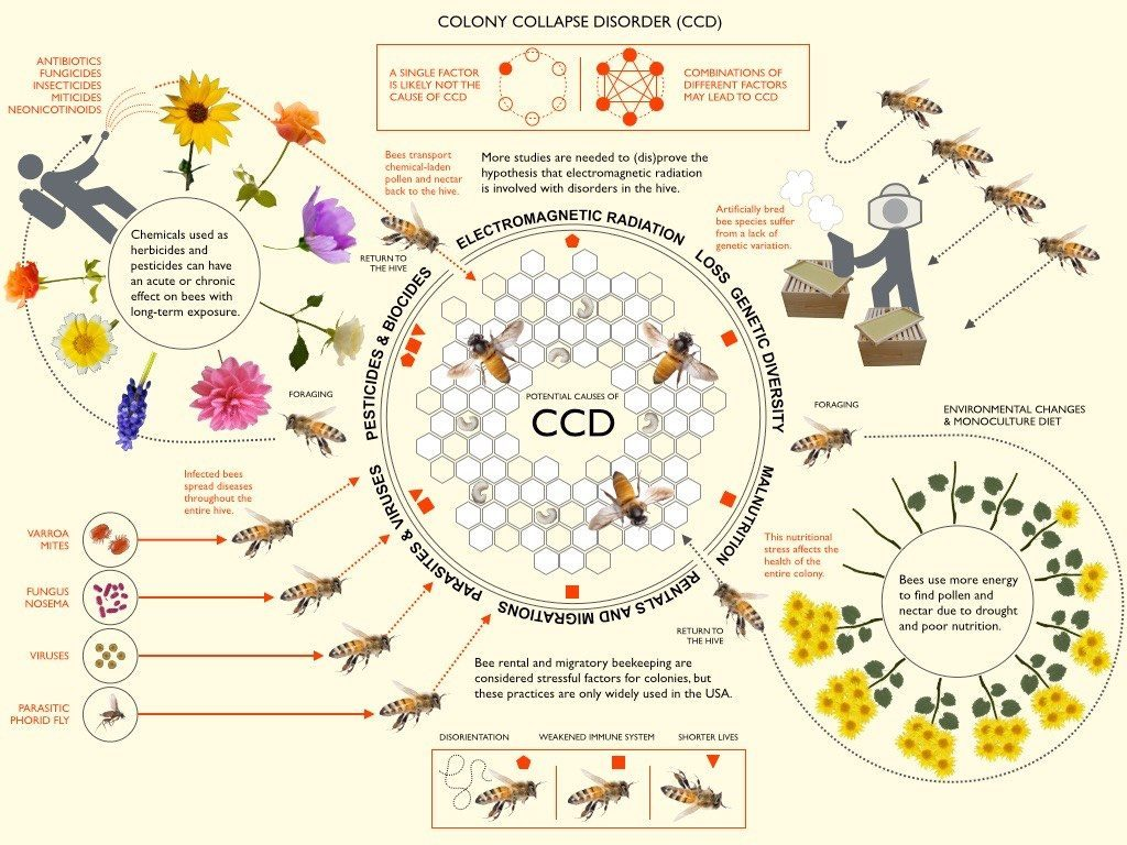 CCD-colony collapse disorder
